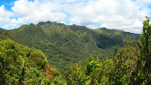 Manoa Cliffs Trail 01