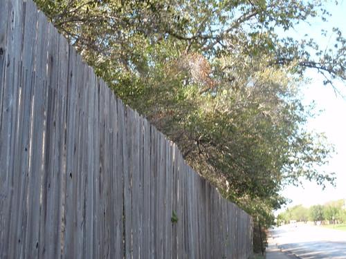 Fence and Treeline
