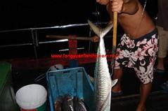 20100843 (fymac@live.com) Tags: mackerel fishing redsnapper shimano pancing angling daiwa tenggiri sarawaktourism sarawakfishing malaysiafishing borneotour malaysiaangling jiggingmaster