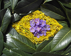 Congratulations to the Independence Day....BRAZIL ! (Colliefan) Tags: park flowers autumn decorations light brazil portrait plants sun plant flower color macro green fall nature floral colors beautiful leaves yellow wonderful germany garden deutschland licht photo colorful flickr photographie frankfurt herbst natur blumen greetings blooms grn multicolored independenceday colori farben colliefan beautiflower