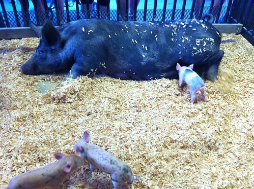 Pig Palace!