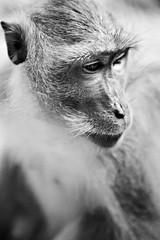 Monkey temple bw (Fantasma Doido) Tags: park thailand monkey you like national ko suk enticknap kosuk monkeytemplewould peanutnutcuteeyesblackandwhiteblack whitebwrichard