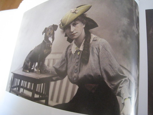 Postcard Dogs