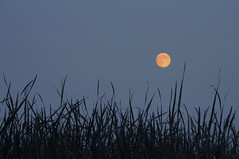 Moonrise (Madison Guy) Tags: moon silhouette wisconsin moonrise wi middleton tiedemanspond