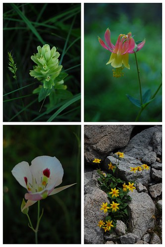 wildflower collage 1
