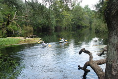 Withlacoochee River (floridahikes) Tags: camping river florida hiking oxbow stateforest floridahikes withlacooochee