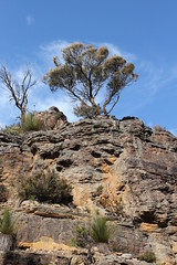 Top of Meehni (Baba Blue) Tags: mountains tree stone sand sandstone australia bluemountains threesisters newsouthwales katoomba eos600d canonrebelt3i