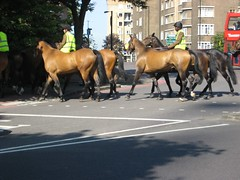 Horses cross gyratory