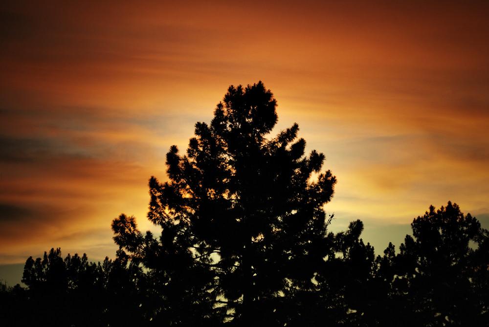 Tree Sky 3