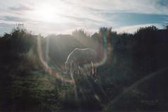 (Pandi.) Tags: caballo caballito laral mirquebonito