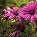 Flowers in my Favorite Color