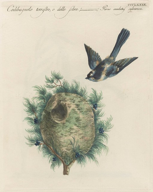 action sketch of long-tailed tit