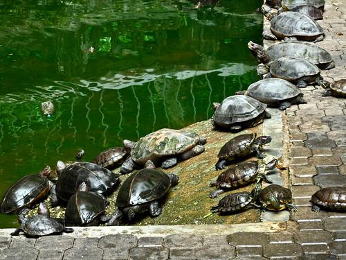 IMG_2156 龟池, tortoise pond,Sam Poh Tong ,三宝洞,怡保