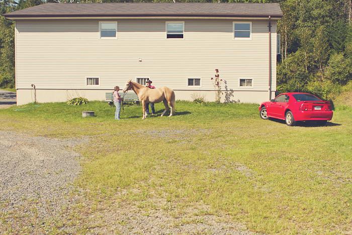 Halifax NS Wedding Portrait Horse Equine photography - Splash & Donna - Nicole Payzant -  (22 of 26)