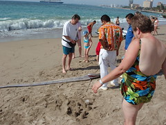 Checking out large long fish Oarfish 'Sea Serpent' washed up on the beach (Eric Broder Van Dyke) Tags: fish beach up out long large washed checking oarfish seaserpent