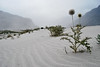Desert in the mountains. (Afrazov) Tags: pakistan desert valley gilgit skardu baltistan concordians shigar