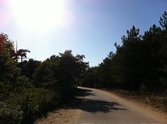 Beach / Pine woods - 21.08.11 (kategillian) Tags: trees beach nationaltrust formby pinewoods