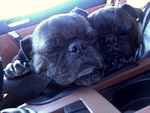 Park brake pugs