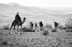 ::: [  ] ::: - Explore (Abdullh AL-Shthri  ) Tags: 28 70200                           removedfromarabstrobistpoolrule1