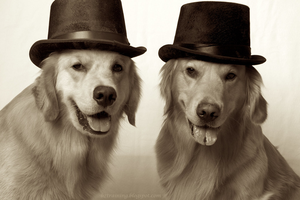 Top Hat Dogs
