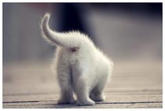 Ojete (Cruces del Sur) Tags: blanco kid cola withe kitty gato culo rabo patitas chiquito pelitos pelillos mojino retofs1 retofs2 modocaza