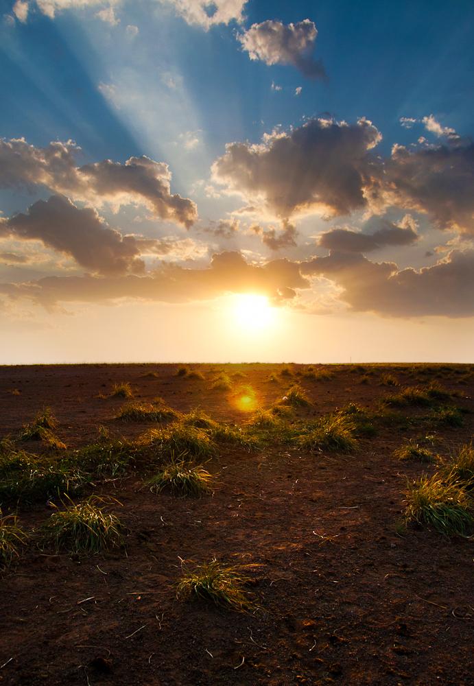 Grassless Lands