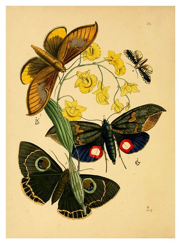 012-The cabinet of oriental entomology…1848- John Obadiah Westwood