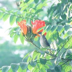 花と小鳥 (Joseph Tarigan) Tags: morning flower color bird film canon square fuji bokeh pastel hana pro vivitar 70200mm kotori 550d 花と小鳥