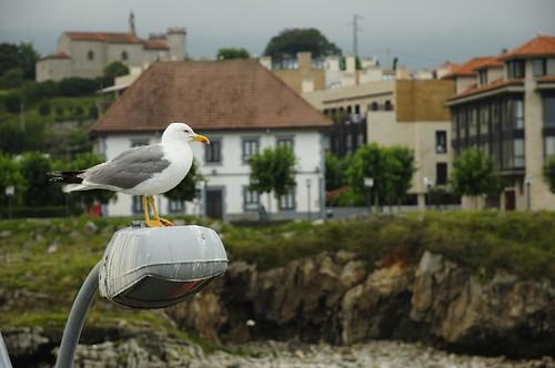 Llanes - Asturias