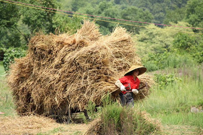 Carrying Rice in Yangshuo, China