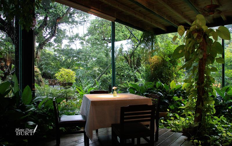 綠意包圍的餐桌-4503