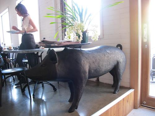Brix pig