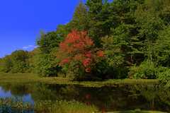 Autum is in the air (l_dewitt) Tags: blue sky color tree fall water leaves pond nikon autum connecticut newengland september marsh northeast southeastern d5000 mygearandme