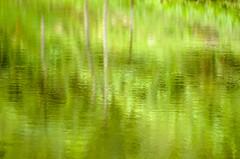 bosque 14 (Luis Alfaro) Tags: verde del lago maria bonito valle reflejo altos