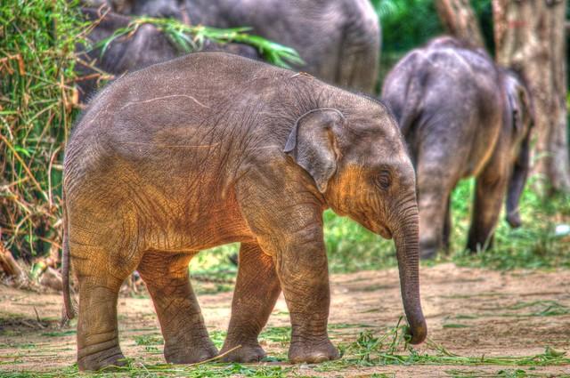 Bannerghatta National Park (Bangalore)