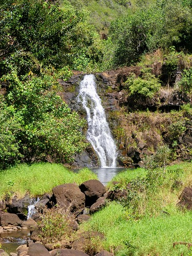 Picture from Waimea Valley