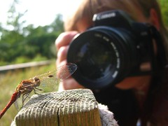 Dragonfly and me - a dreamteam (Seastars world) Tags: selfportrait macro nature animal canon germany insect dragonflies dragonfly natur makro libelle insekt damselfly selbstportrait kiel insekten damselflies libellule libellula odonata libellulidae libel heidelibelle sympetrum libelo segellibelle botanischergartenkiel neuerbotanischergartenkiel dragonflyandme