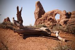 Log (BHagen) Tags: park wood west nature outdoors utah log nikon desert wind hiking arches depthoffield climbing national western moab archesnationalpark d90 erotion