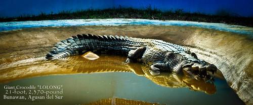 Lolong crocodile
