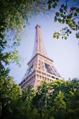(mblsha) Tags: paris france tree green tower îledefrance eiffel afsnikkor24mmf14ged