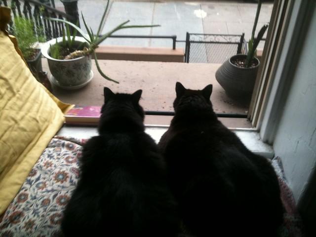 Fat Baci and Shadow Kichi