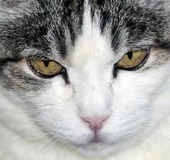 The adorable Baby (FELINOS46) Tags: cats animals nikon gatti d300