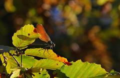 Dj l'automne ? (blogspfastatt (+3.000.000 views)) Tags: autumn light color colour beauty automne season nice colorful herbst lumiere herzog couleur farben saison kolor jesien pfastatt blogspfastatt