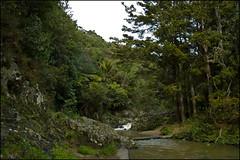 Walkway to Piroa Falls, Waipu Gorge Scenic Reserve