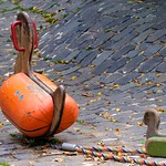 Ducks, Santa Cruz de Tenerife thumbnail