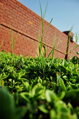green (Noran.A.S) Tags: blue red sky green nature grass flicker