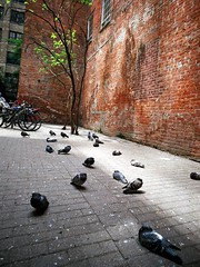 pigeons (Ian Muttoo) Tags: street toronto ontario canada tree brick film bicycle wall nikon fuji pigeon pigeons gimp wideangle bicycles 200 weathered f2 nikonf2 vivitar 21mm nikonf2photomic dp1 f38 easypix filmphotographypodcast vivitar21mmf38 48990015edit