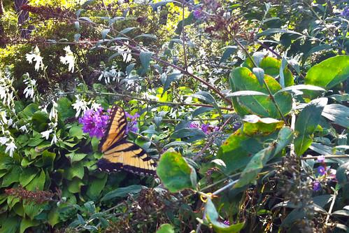 Mutant Butterfly.