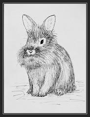 Leo, Skizze (Gret B.) Tags: rabbit bunny leo drawing fell kaninchen niedlich zeichnung hasen skizze hoppel schwarzweis ss plschig
