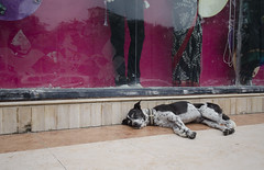 holding up the building (sgtsalamander) Tags: dog india white black building purple sleep sidewalk snooze mumbai linkingroad d7000